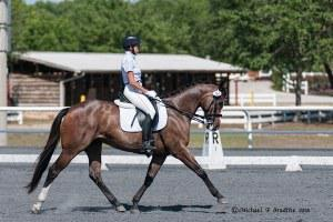 PS Calling Card: Quarter Horse mare for sale